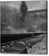 Tracks And Trees Acrylic Print
