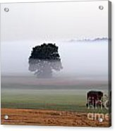 Tractor In Field Low Fog With Tree And Harvester Acrylic Print