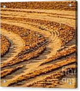 Tractor Tracks Acrylic Print