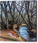 Trail By Fountain Creek Winter Acrylic Print