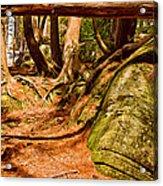 Trail In A Forest, Muskoka, Ontario Acrylic Print
