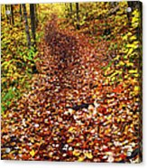 Trail In Fall Forest Acrylic Print