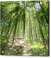 Trail In The Forest Acrylic Print