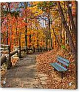 Trail Of Gold Acrylic Print