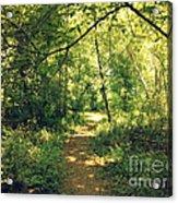 Trail Of Hope II Acrylic Print