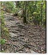 Trail Of Roots Acrylic Print