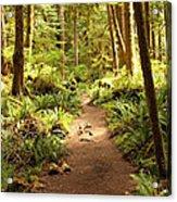 Trail Through The Rainforest Acrylic Print by Carol Groenen
