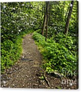 Trail To Chimney Tops - D005669a Acrylic Print