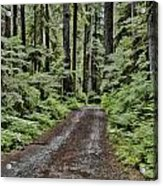 Trail To Jaw Bone Flats Acrylic Print