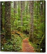 trail to Lower Lewis Falls Acrylic Print