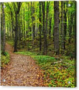 Trail To Miners Falls Acrylic Print