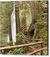 Trail To Waterfall Acrylic Print