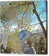 Trailhead Area In Andreas Canyon In Indian Canyons-ca Acrylic Print