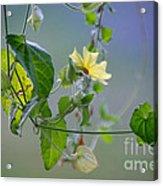 Trailing Vines Acrylic Print