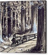 Train In The Redwoods Acrylic Print