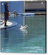 Trainer And Duo Of Dolphins At The Underwater World In Sentosa Acrylic Print