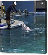 Trainer Feeding Duo Of Dolphins At The Underwater World In Sentosa Acrylic Print