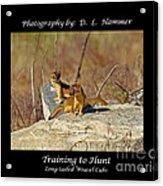 Training To Hunt Acrylic Print