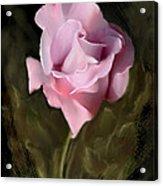 Tranquil Rose Acrylic Print