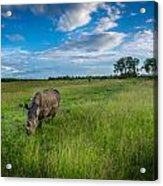 Tranquility On The Plains Acrylic Print
