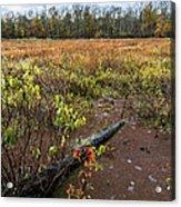 Transcending To Autumn Acrylic Print