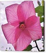 Translucent Flower After The Rain Acrylic Print