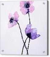 Translucent Poppies Acrylic Print