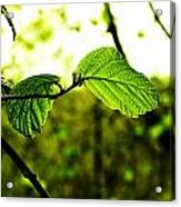 Transparent Acrylic Print
