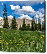 Trappers Lake Meadow Acrylic Print