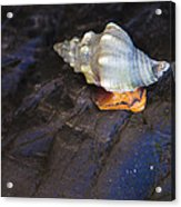 Traveling At A Snail's Pace Acrylic Print