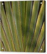Traveller's Palm Patterns Dthb1542 Acrylic Print
