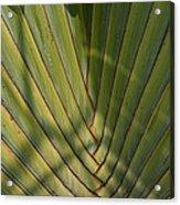Traveller's Palm Patterns Dthb1543 Acrylic Print