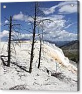 Travertine Terrace And Dead Trees Acrylic Print