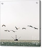 Trawler And Pelicans Acrylic Print