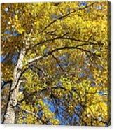 Tree 4 Acrylic Print