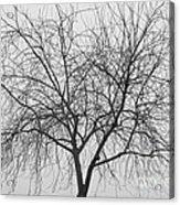 Tree Abstract In Black And White Acrylic Print