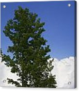 Tree Against A Cloudy Blue Sky In Vermont Acrylic Print