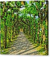 Tree Alley In Castle Park Acrylic Print