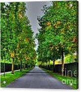 Tree Alley Acrylic Print