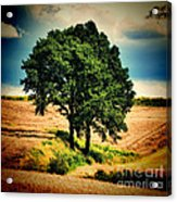 Tree Alone Acrylic Print by Boon Mee