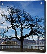 Tree And Borromee Islands Acrylic Print