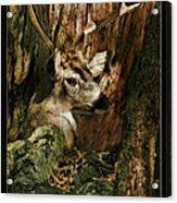 Tree And Buck Acrylic Print