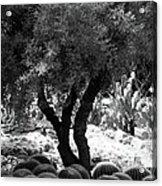 Tree And Cactus Acrylic Print