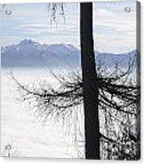 Tree And Fog Acrylic Print