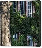 Tree And Ivy Windows Michigan State University Acrylic Print