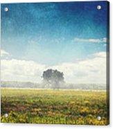 Tree And Meadow Acrylic Print