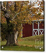 Tree And Red Barn Acrylic Print