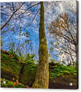 Tree And Rocks Acrylic Print