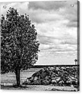 Tree And Stone Acrylic Print
