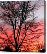 Tree and Sunset. Acrylic Print